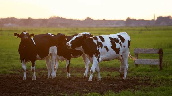 Evidence Technology - Soluciones en la agricultura